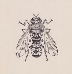 Horse Fly (Bug) Illustration by Stippling or Pointillism