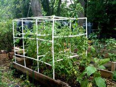DIY PVC Tomato Cage
