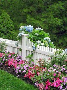 Barrière blanche, hortensias bleus et fleurs roses