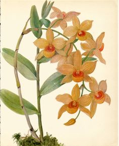 Use coupon code PINTEREST to save 10% off of your purchase! Beautiful VINTAGE ORCHID PRINT Orange Dendrobium by UpcycleFarmer