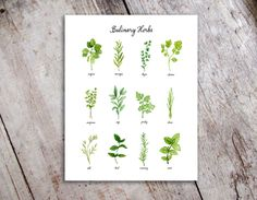 Kitchen Herbs Watercolor Art Print. This print features original illustrations painted in watercolor by Stephanie Hathaway. Please note that colors may differ slightly from what you see on your screen. This piece is printed on heavy stock, acid free watercolor paper. Just know that lots of love and care has gone into the design and production of these prints. Included on this print: cilantro, chives, marjoram, mint, oregano, parsley, rosemary, sage, tarragon, thyme, basil and dill. This is…