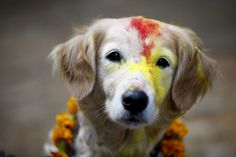 A dog is covered in vermillion powder as Nepalese police officers worship dogs during the festival.