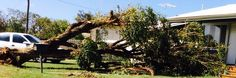 Look at the damage it caused. Western Australia, Westerns, Plants, Plant, Planets