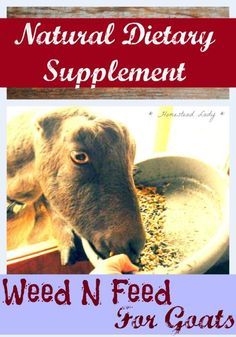 Natural Dietary Supplement for Goats l DIY supplement for your goats l from Homestead Lady:
