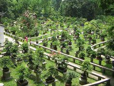 Bonsai Garden <3