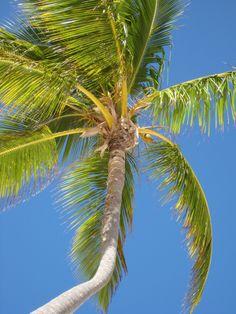 Dominican Republic: Punta Cana