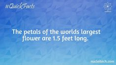 The petals of the worlds largest flower are 1.5 feet long.