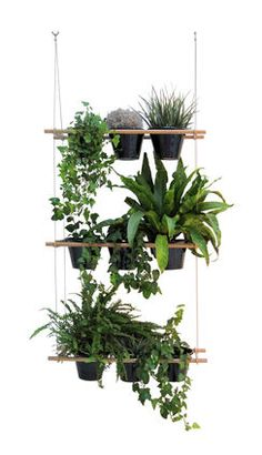 Etcetera Window box - Vegetable screen Natural wood by Compagnie from Made In Design. Saved to Garden . Flower Planters, Hanging Planters, Hanging Baskets, Flower Pots, Fall Planters, Hanging Window Boxes, Window Planter Boxes, Planter Ideas, Indoor Window Planter