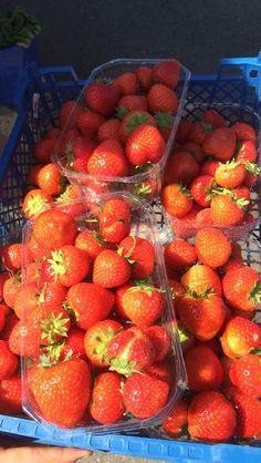 Strawberries 4eva