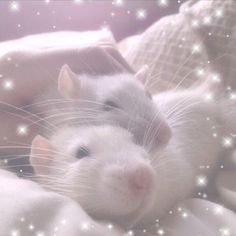 Baby Animals, Funny Animals, Cute Animals, Emo Princess, Cute Rats, Kawaii, Cute Memes, Reaction Pictures, Belle Photo