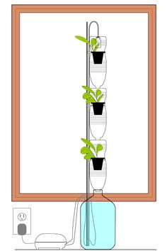 A Windowfarm from www.rndiy.org. This is good for small spaces. You can purchase or build one yourself. It's great to reduce your carbon footprint!