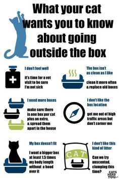 What your cat wants you to know about going outside the box...