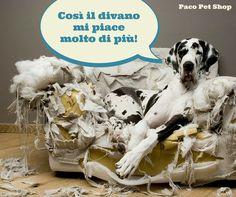 Diciamolo...ai nostri piccoli amici perdoniamo tutto  Se volete però distrarlo da divani e mobili, ecco i giochi di Paco Pet Shop studiati per il vostro #cane : http://goo.gl/loS1xB