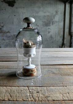Glass Cloche with White Porcelain Door Knob  by therhubarbstudio