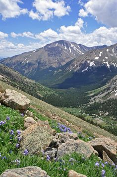 Here is a picture of Mount Elbert, the highest mountain in Colorado. It was taken from Mount Massive, the second highest. The flowers are skypilots. The creek is Halfmoon. Rex Berkey