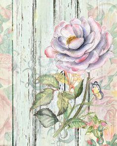 Постер-цветок Чайная роза.