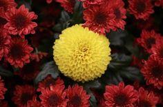 Flower garden show