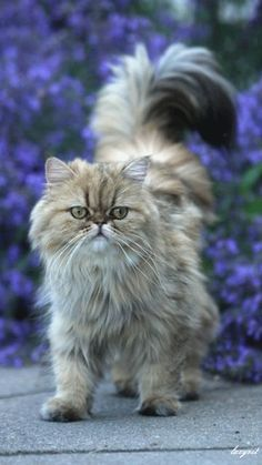 Beautiful cat......