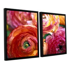 Ranunculus Close Up by Kathy Yates 2 Piece Floater Framed Photographic Print on Canvas Set
