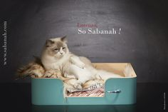 Luxury cat products Sabanah cats basket Teal Blue S