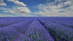 Скачать обои provence, france, прованс, франция, лаванда, раздел пейзажи в разрешении 1366x768