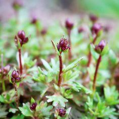 Was blüht bei euch schon? News, Garden, Flowers, Plants, Instagram, Garten, Lawn And Garden, Gardens, Plant