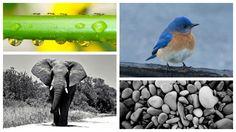 Ants, Bird, Pebbles, Elephant - Divine Calling