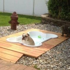 Bone Shaped Dog Pool! http://whatpetswant.com/bone-shaped-dog-pool/