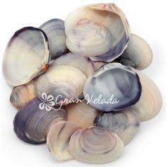 Concha Purple Clam, a granel