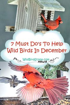 Learn about the 7 Must Do's To Help Backyard Birds In December. There are so many things that can be done to bring success and help birds survive. Watch Drawing, Bird Feeding Station, Cardinal Birds, Viewing Wildlife, Humming Bird Feeders, Backyard Birds, Wild Birds, Bird Watching, Survival Skills