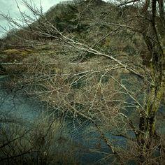 その木は、元々はひとつ。だからこそ、通じ合い、感じ合える。そして、これから、本来の形で、支え合えるのです。巡り会いは、必然。  #japan  #nara  #tsukigase  #honrai  #hituzen  #aozora  #GRD4