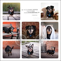 a little behind-the-scenes ~ {Ontario pet-exclusive photographer} » scruffy dog photography | best professional pet photographer