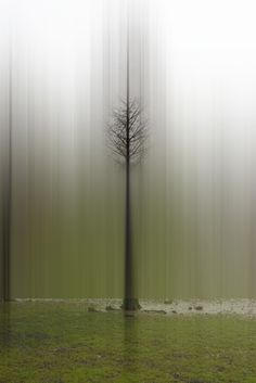 Hungry Ghost Collective — Ten Questions with Ellen Jantzen Dark Photography, Contemporary Photography, Cozy Rainy Day, Landscape Paintings, Tree Paintings, Abstract Landscape, Photo Manipulation, Beautiful Images, Summer