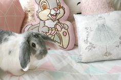 Darling Jordan!: Living With A House Bunny