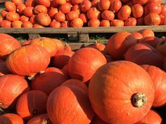 TOP recepty z tekvice - Receptik.sk Pumpkin, Vegetables, Food, Hokkaido Dog, Buttercup Squash, Meal, Pumpkins, Essen, Vegetable Recipes