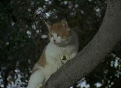 "Victoria is one of Samantha's neighbor's cats who gets stuck in a tree in the Bewitched episode ""Mrs. Stephens, Where Are You?"" (1969)"