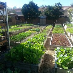 Agricultura Orgânica, Família Dervaes!