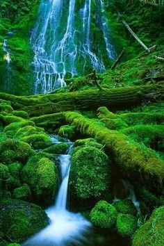Nature beautiful #waterfall #mountain #green