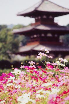 法起寺 秋桜 Japan