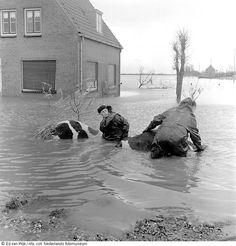 Flood in 1953... the Netherlands. .. www.geheugenvannederland.nl