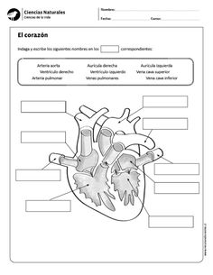 Respiratory System Not Labeled Black And White Respiratory