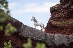 "611 gilla-markeringar, 11 kommentarer - Liga Liepina (@liga.liepinaa) på Instagram: ""That Lion King moment - Equine edition  . . . . #iceland #icelandichorse #islandspferd #horse…"""