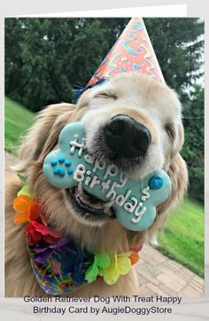 """Send special birthday greetings with this cute card! Design features a photograph of a happy golden retriever dog who is wearing a party hat and holding a """"happy birthday"""" bone-shaped cookie in his mouth. Customizable inside text reads, """"Hope you enjoy! Dog First Birthday, Happy Birthday Wishes For A Friend, Happy Birthday For Her, Puppy Birthday, Special Birthday, Birthday Gifs, Birthday Ideas, Birthday Card Sayings, Happy Birthday Quotes"""