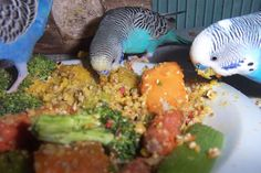 Simple, healthy budgie food recipes you can make at home for your little guys!