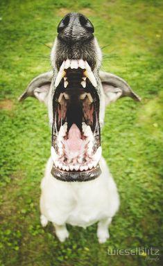 Une sélection des portraits de la photographe allemandeElke Vogelsang, basée à Hildesheim,qui réalise de superbes photographies canines. Des portraits d
