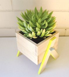 Have your own little box of greenery indoors!  These miniature planter boxes have been carefully handmade from Australian hardwood. Each box comes with hand-painted legs to add a subtle pop of colour to compliment your living or work area (available in any colour).  Size of the box is 8cm (h) x 10.5cm (w), total height is 12cm - Perfect for city spaces, window sills, undercover balconies or just bringing the outdoors in.   Suitable for small succulents or cactus varieties - included is ...