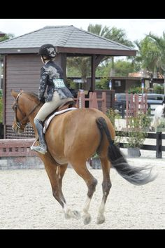 If riding was just bright lights and blue ribbons, I would have quit long ago.   -George Morris