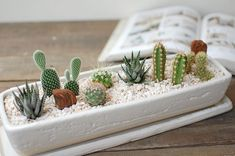These Popular Cactus Arrangements are the Latest Trend for Adding Green to a Hom. - Succulent Addiction - These Popular Cactus Arrangements are the Latest Trend for Adding Green to a Home cactus and succule - Small Cactus Plants, Cacti And Succulents, Planting Succulents, Planting Flowers, Air Plants, Potted Plants, Crassula Succulent, Succulent Gardening, Succulent Terrarium