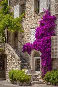 (France)— Colorful Bougainvillea and staircase lead to home in St. Beautiful Homes, Beautiful Places, Front Entrances, Stone Houses, Colorful Flowers, Exotic Flowers, Purple Flowers, Porches, Countryside