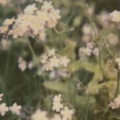 Nature Aesthetic, Aesthetic Images, Aesthetic Photo, Love Is Patient, Photo Dump, Film Photography, Photography Flowers, Pretty Pictures, Scenery